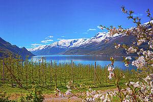 Norwegens schönste Fjorde