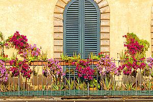 Blütenzauber in der Toskana