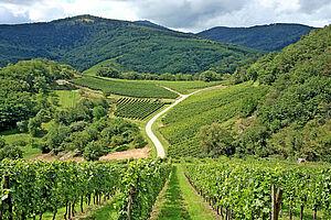 Wein, Berge & Meer
