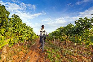 Radreise Istrien