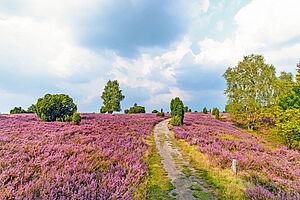 Naturparadies Lüneburger Heide