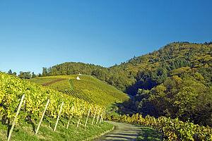 Naturerlebnis & Weinstraßen im Schwarzwald & Elsass