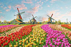 Bollenstreek – Der Blumenkorso